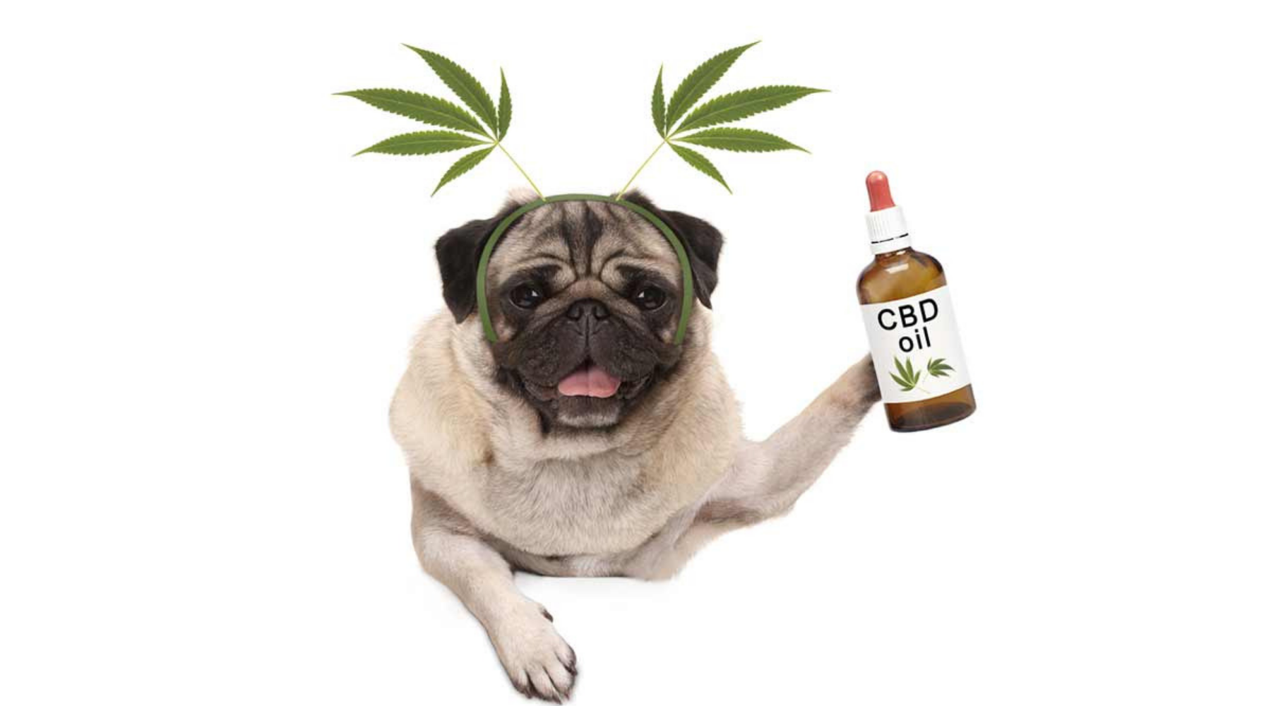 Ultimate Guide to CBD Hemp Oil for Pets